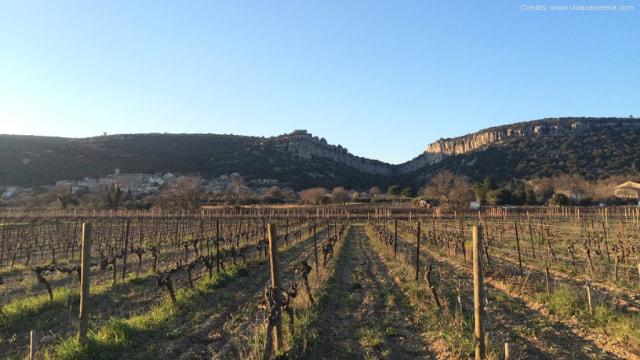Francia – Mi Reconversión Profesional al Vino